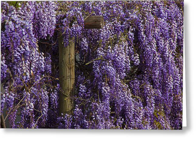 Wood Post Greeting Cards - Wisteria Greeting Card by Garry Gay