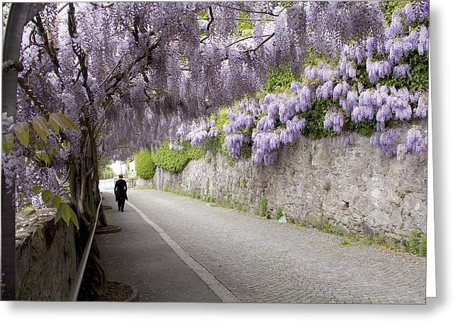 Wisteria Lane Greeting Card by Colleen Williams