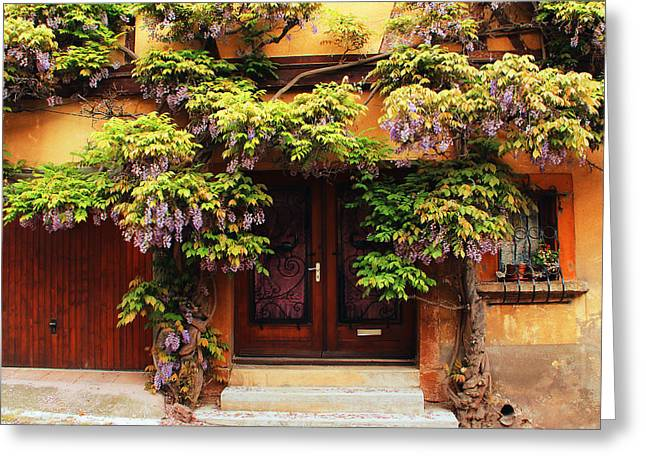 Wisteria In Bloom Greeting Cards - Wisteria on Home in Zellenberg France 2 Greeting Card by Greg Matchick