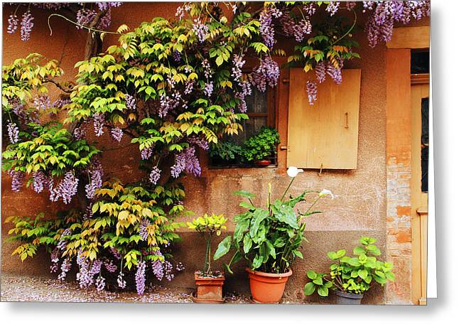 Wisteria In Bloom Greeting Cards - Wisteria On Home in Zellenberg France Greeting Card by Greg Matchick
