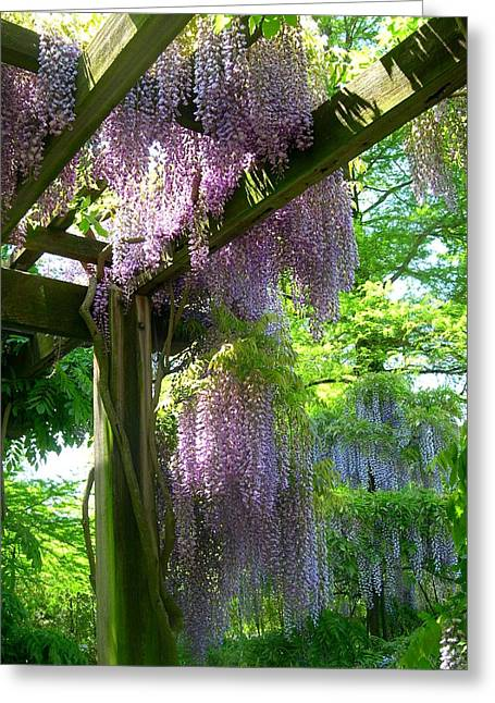 Wisteria In Bloom Greeting Cards - Wisteria Trellis Greeting Card by Susan Maxwell Schmidt