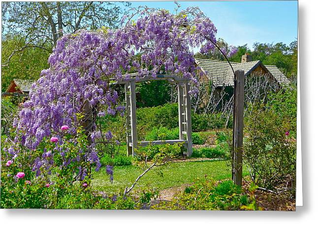 Wisteria In Bloom Greeting Cards - Wistful Wisteria Greeting Card by Denise Mazzocco