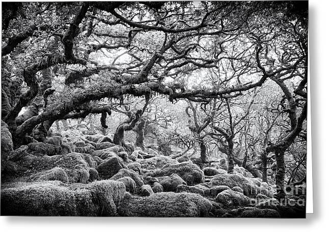 Quercus Greeting Cards - Wistmans Wood Dartmoor Devon  Greeting Card by Tim Gainey