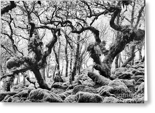 Quercus Greeting Cards - Wistmans Wood Devon Greeting Card by Tim Gainey