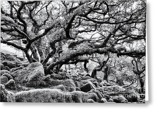 Quercus Greeting Cards - Wistmans Wood  Greeting Card by Tim Gainey