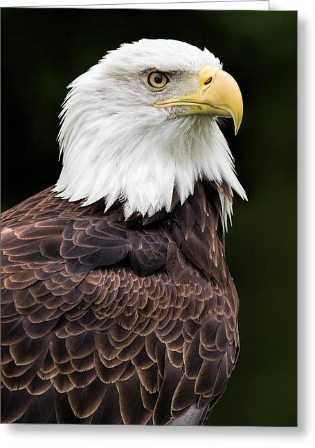 National Symbol Greeting Cards - With Dignity Greeting Card by Dale Kincaid