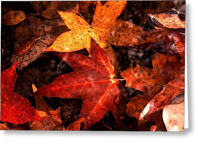 Edwin Warner Park Greeting Cards - With Love - Autumn Pond Greeting Card by Theresa  Asher