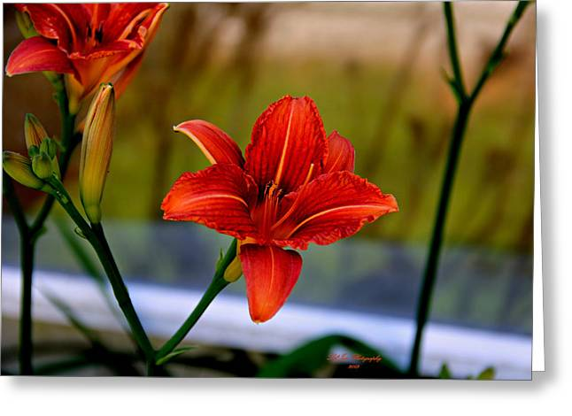 Day Lilly Digital Greeting Cards - With Open Arms Greeting Card by Jeanette C Landstrom