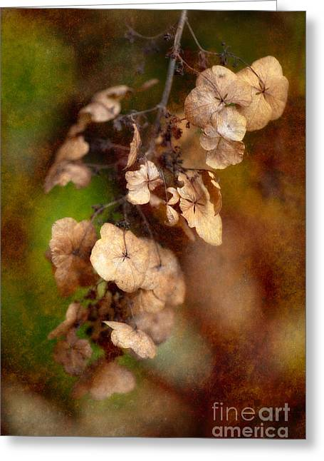 Dried Hydrangeas Greeting Cards - With the Passing of Time Greeting Card by Venetta Archer