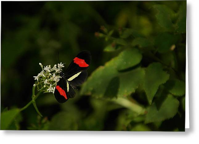 Little Critters Greeting Cards - With Wings Spread Greeting Card by Jeff  Swan