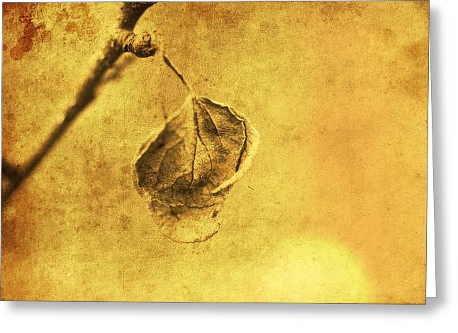 Maturity Greeting Cards - Withered leaf art style Greeting Card by Toppart Sweden