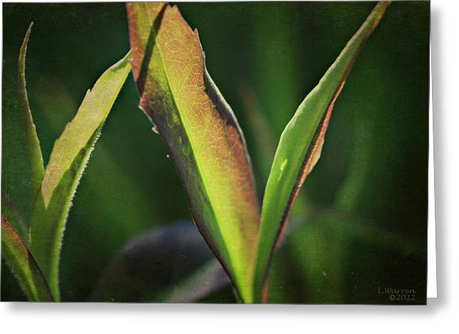 Green Blade Of Grass Greeting Cards - Within Reach Greeting Card by Lyndsey Warren