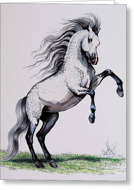 Horse Drawing Greeting Cards - Withoutadoubt - Gray Arabian Mare Greeting Card by Cheryl Poland