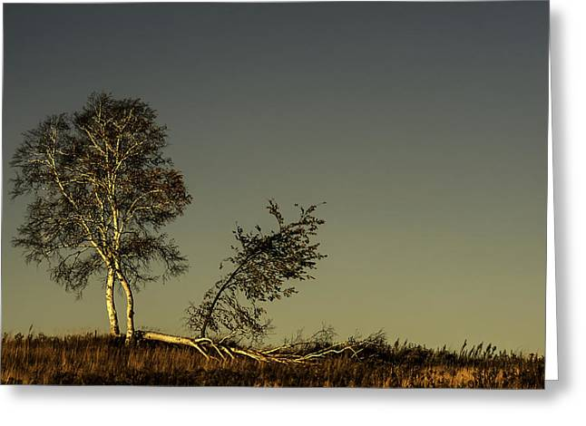 Seren Greeting Cards - Witness to Time Greeting Card by Curtis Dale