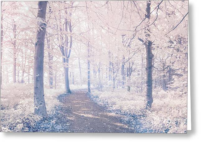 Infrared Greeting Cards - Wodland walk Greeting Card by Janet Burdon