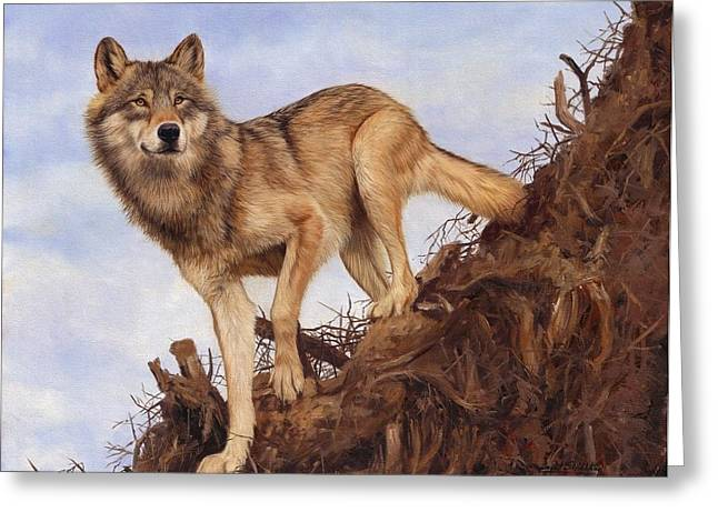 Grey Wolf Greeting Cards - Wolf and Tree Root Greeting Card by David Stribbling