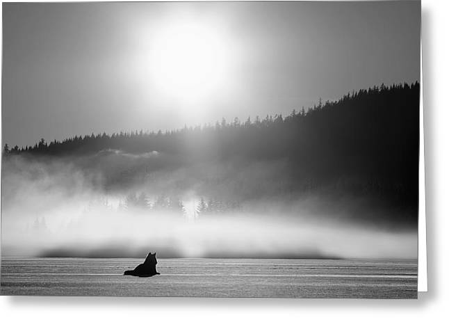 Juneau Park Greeting Cards - Wolf Basking In Sunlight Near Juneau Greeting Card by John Hyde