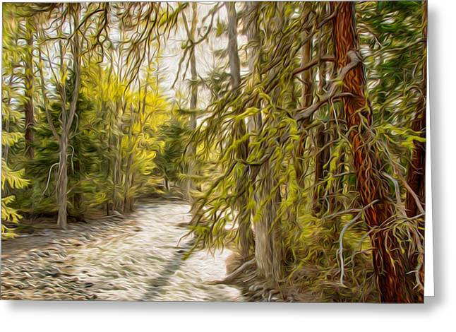 Wolf Creek Afternoon Light Greeting Card by Omaste Witkowski