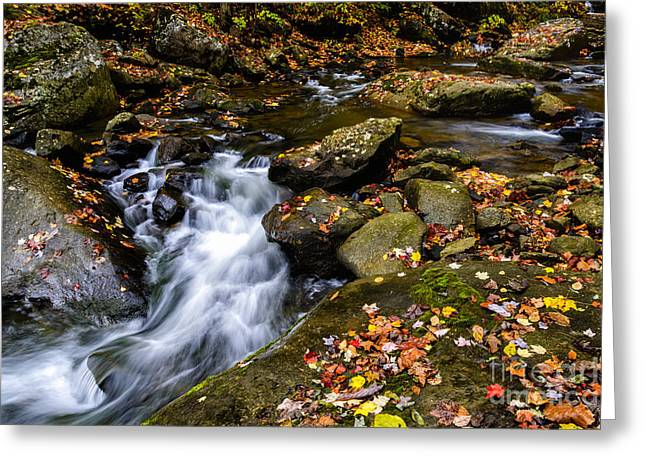 Wolf Creek Photographs Greeting Cards - Wolf Creek New River Gorge Greeting Card by Thomas R Fletcher