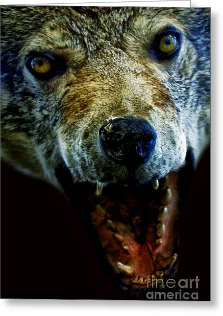 Wolf Face Greeting Cards - Wolf Greeting Card by Margie Hurwich