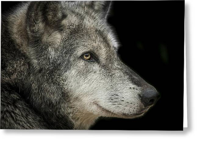 Wolf Portrait Greeting Cards - Wolf Greeting Card by Paul Neville