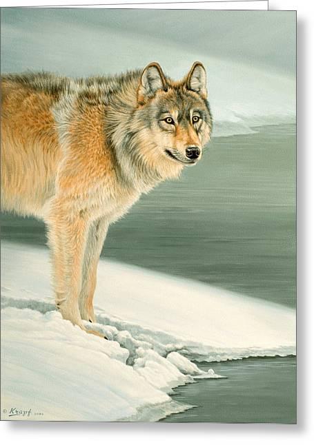 Wildlife Greeting Cards - Wolf Portrait-Lamar Valley  Greeting Card by Paul Krapf