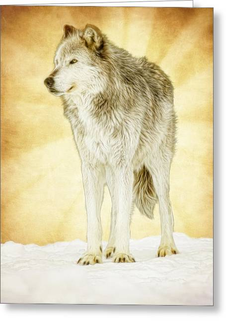 Preditor Greeting Cards - Wolf Shine Greeting Card by Steve McKinzie