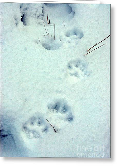 Animal Tracks Greeting Cards - Wolf Tracks In Snow Greeting Card by Mark Newman