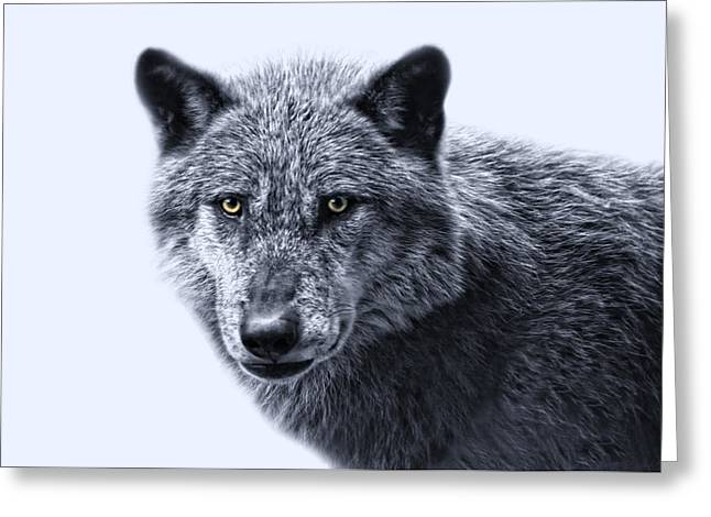 Color Key Greeting Cards - wolfman II Greeting Card by Joachim G Pinkawa