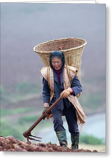 Woman Farm Worker Harvesting Potatoes Greeting Card by Tony Camacho