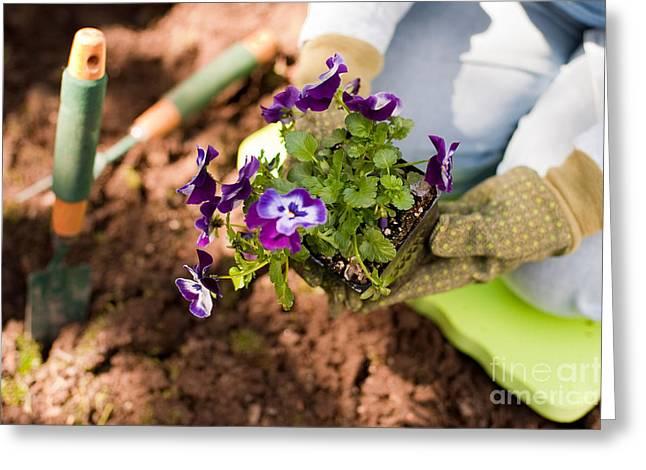 Gardening Tools Greeting Cards - Woman Gardening Greeting Card by Jim Corwin