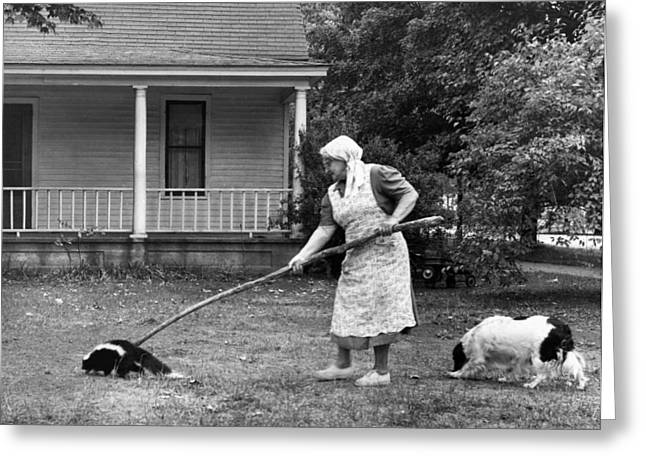 Woman Gently Moves A Skunk Greeting Card by Underwood Archives