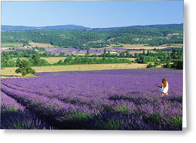 Women Only Photographs Greeting Cards - Woman In A Field Of Lavender Greeting Card by Panoramic Images