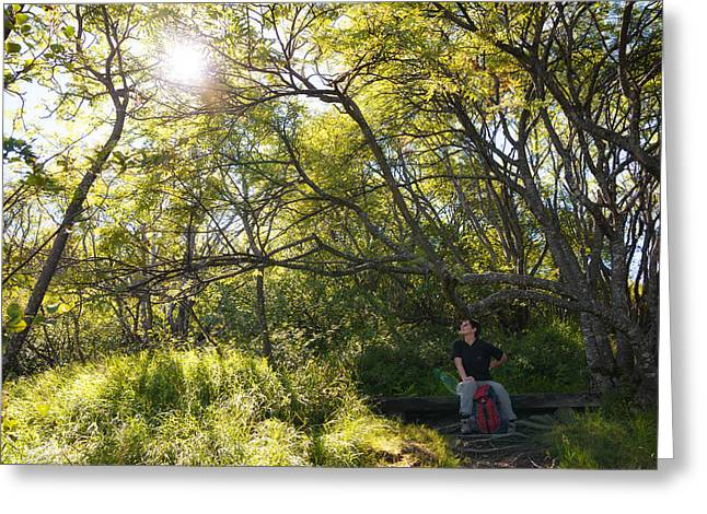 Pause Greeting Cards - Woman sitting on bench - bright green trees sun is shining Greeting Card by Matthias Hauser