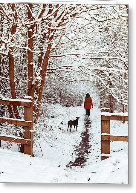 Snow-coated Greeting Cards - Woman Walking Dog Greeting Card by Amanda And Christopher Elwell