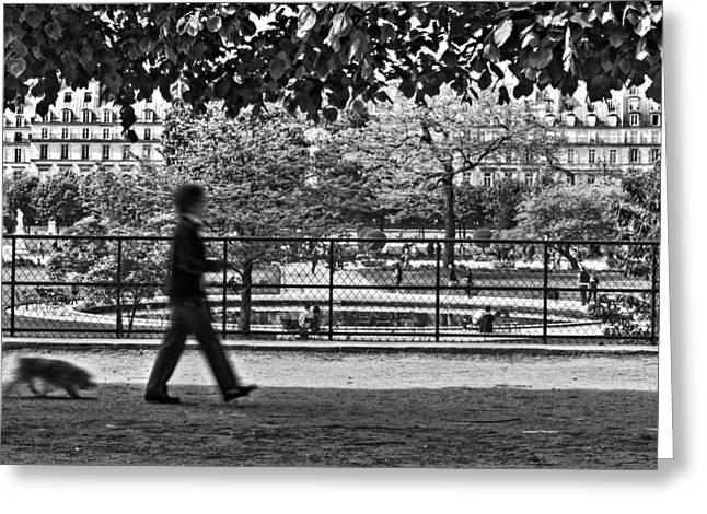 Tuileries Greeting Cards - Woman Walking Dog in the Tuileries Gardens - Paris Greeting Card by Barry O Carroll