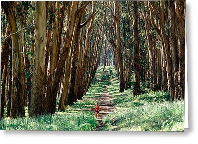 Person Greeting Cards - Woman Walking On A Path In A Park, The Greeting Card by Panoramic Images