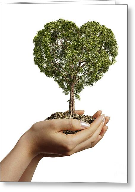 Caring Mother Greeting Cards - Womans Hands Holding Soil With A Tree Greeting Card by Leonello Calvetti