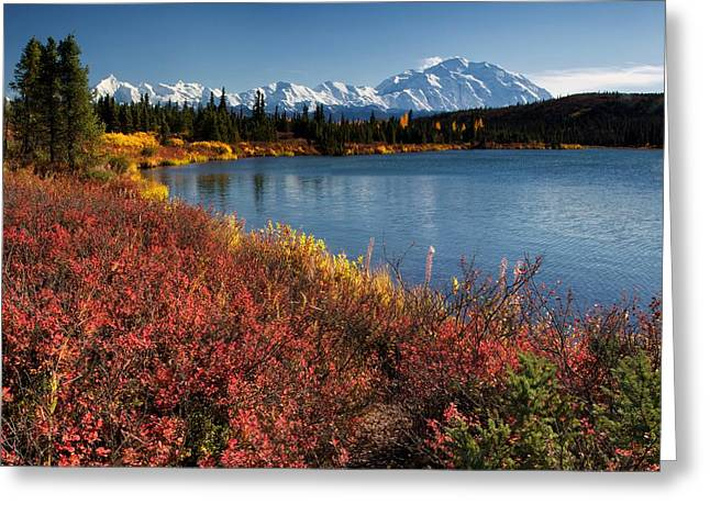 Denali National Park Greeting Cards - Wonder LAke Greeting Card by Ed Boudreau
