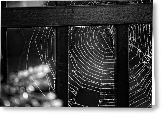 Spider Web Greeting Cards - Wonder Web Greeting Card by Carrie Ann Grippo-Pike