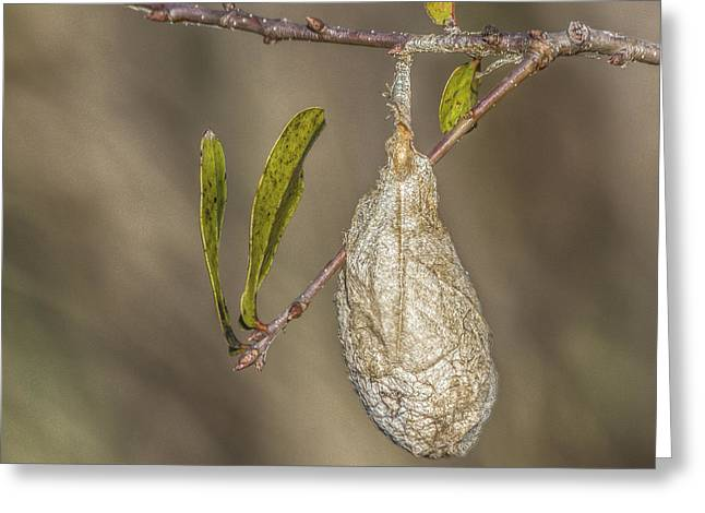 Cocoon Greeting Cards - Wonder whats inside Greeting Card by Jane Luxton