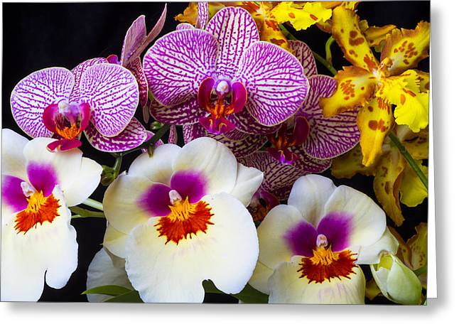 Row Greeting Cards - Wonderful lovely Orchids Greeting Card by Garry Gay