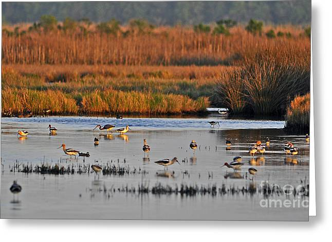 Louisiana Heron Greeting Cards - Wonderful Wetlands Greeting Card by Al Powell Photography USA