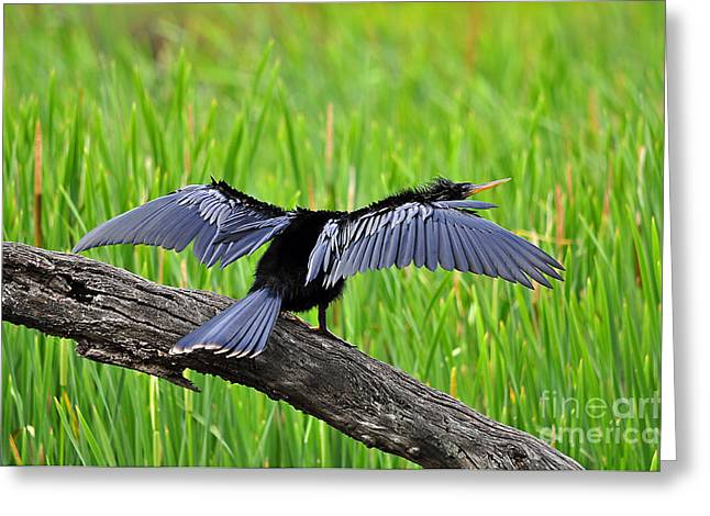 Wonderful Wings Greeting Card by Al Powell Photography USA