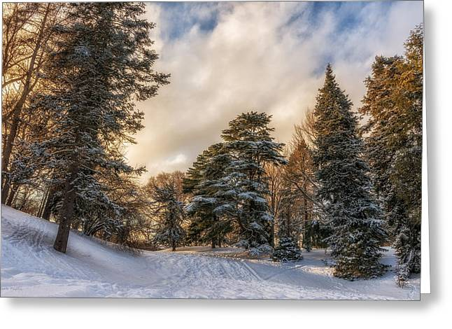 Fir Trees Greeting Cards - Wonderland Greeting Card by Mark Papke