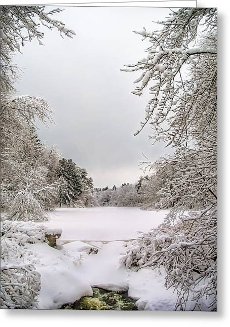 Wintry Greeting Cards - Wonderland Greeting Card by Penny Pesaturo