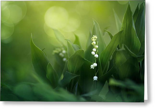 Lily Art Greeting Cards - Wonders of Spring Forest Greeting Card by Magda  Bognar