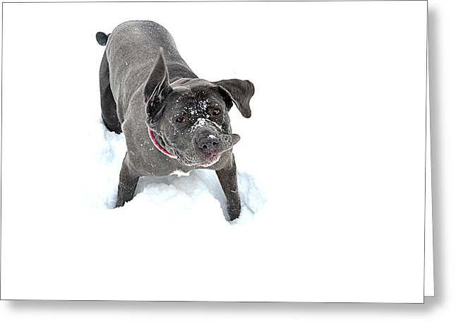 Slobber Greeting Cards - Wonky Greeting Card by Carlee Ojeda
