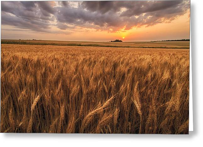 Wheat Art Greeting Cards - Wont Be Long Greeting Card by Scott Bean