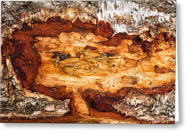 Warm Tones Greeting Cards - Wood closeup - tree trunk Greeting Card by Matthias Hauser